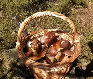 Plný košík krásných hub