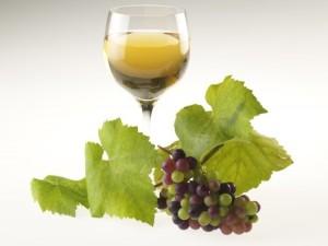 Víno a hrozny